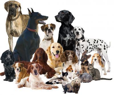 Pele mele chiens copie